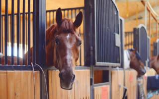 Как построить конюшню для лошади