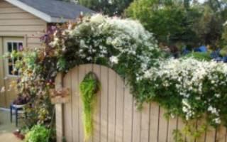 Как украсить забор на даче своими руками