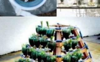 Огурцы на балконе выращивание в пластиковых бутылках