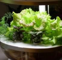 Гидропоника в домашних условиях зелень своими руками