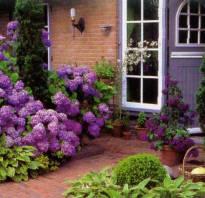 Самые красивые кустарники для дачи
